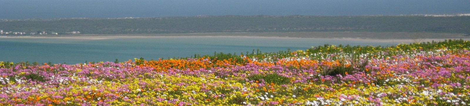 flowers-west-coast